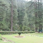 Annadale amidst Forest
