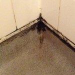 Moldy shower