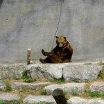 le premier ours