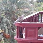 bird on balcony