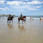 horses are always spectacular on the beach