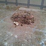 muschio e polvere raccolti sul terrazzino