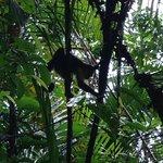 Baru Monkey