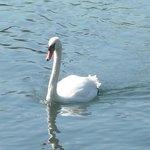 fauna protetta del lago