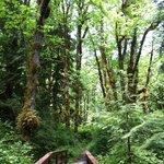 Der Wald in der Umgebung des Resorts
