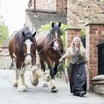 Beautiful Shire Horses which can also be seen pulling a cart