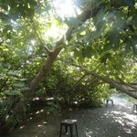 Inside the fig forest. Stools are placed throughout to help you pick figs.