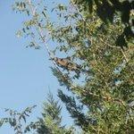 The resident green heron.
