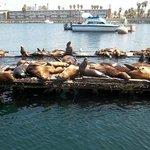 Sunning sea lions.