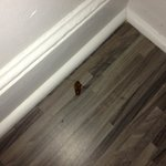 Photo we took when we first discovered this visitor near the dresser where we discovered the fir