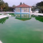 Pool area.  Pool green