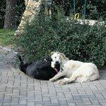 I nostri cagnoloni Oscar e Neve
