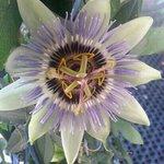 fiori all'entrata