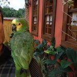 Louro, the famous & friendly parrot