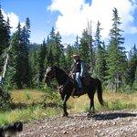 Expert Horsemanship