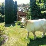 ho la vache  !!!!