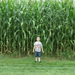 My Grandson enjoyed the Corn Field next to the parking lot!