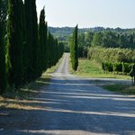 Cypress lined road to the vineyards