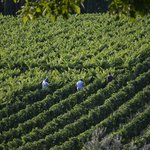 Workers in the vineyards - view from the room