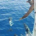 Incontri occasionali con i delfini