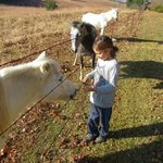 feeding the ponies next to the campground