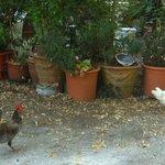 le galline!!!