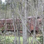 Old locomotive nearby off tracks in  woods; strange sight.