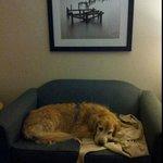 My sister's dog, enjoying his Pomeroy stay in Vegreville!