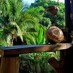The view from one of the large bamboo bungalows