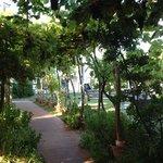 ariadimari, garden area