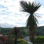 Palm trees in Plockton