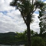 Palm trees along the seafront in Plockton