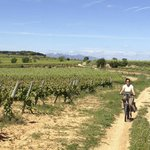 "With ""burricleta"" through the Penedes, the Montserrat in the background"