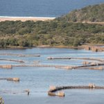 estuary, fish traps and Indian Ocean