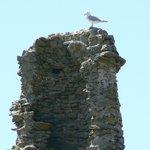 le vieux château de l'Ile d'Yeu
