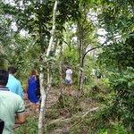 The Walk Inside the Jungle