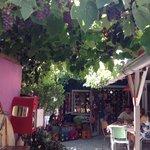 Under grape vine