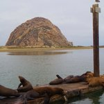 sea lions, sea otters - right outside the hotel