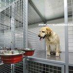 Mascotas - Pets rooms