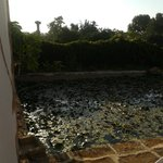 frog pool