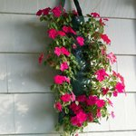 Hanging Flower Baskets outside Motel Room