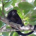 Visita de una familia de monos en las cabinas