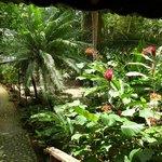 desde la ventana de la habitación, un jardín increíble