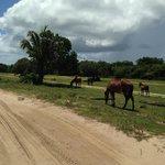 Wild horses everywhere ~