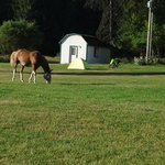 Shelby the horse guarding Kevin S's campsite