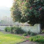Wall between the garden and vineyards