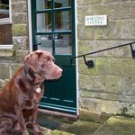 Our dog Cadbury at Rowntree Cottage