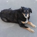 Lyttelton - a local friendly dog