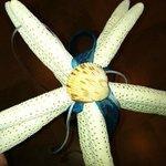 Starfish Ringbearer
