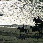Horses on the beach 9th floor view